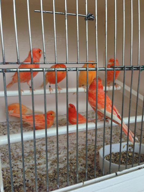 The Heartbreak and Beauty of a caged bird