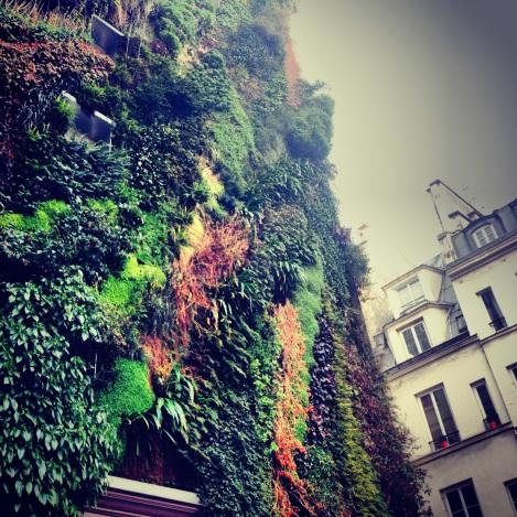 Amazing Vegetal Wall